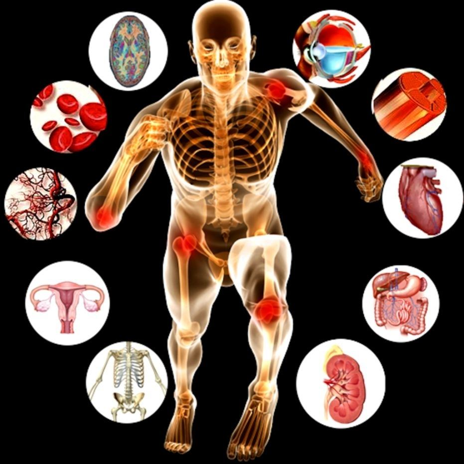 Science / Anatomy and Physiology